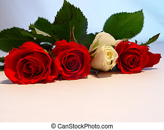 Romance - Red and white roses