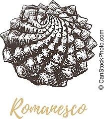 romanesco, 밑그림, 브로콜리, illustration.