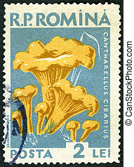 ROMANIA - 1958: shows cantharellus cibarius golden chanterelle, fungus, series Mushrooms