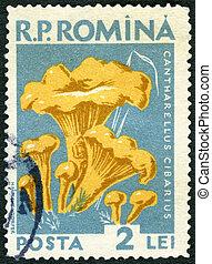 ROMANIA - 1958: shows cantharellus cibarius golden chanterelle, fungus, series Mushrooms