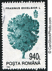 Fraxinus excelsior - ROMANIA - CIRCA 1994: stamp printed by...