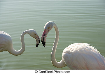 Romanic flamingo couple - Romanic couple of flamingo. Two ...
