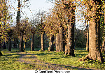 Romantic and mysterious alley path with old big trees in park. Beauty nature landscape. Summer walk.