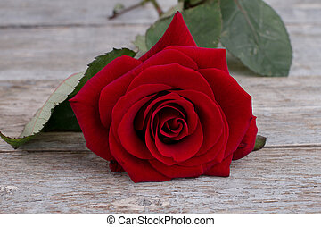 Romantic background with red rose.