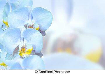 Romantic blue orchids flowers