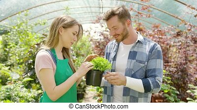 Romantic couple with green plant in hothouse - Handsome man...