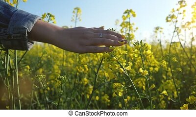 Romantic female hand touching the yellow rapeseed flowers in...