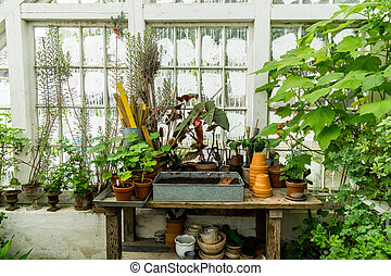 romantic idyllic plant table in the green house with old retro terracotta flower pots