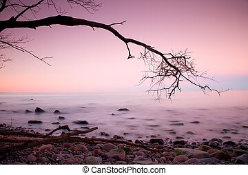 Romantic morning. Bended tree above sea level, boulders sticking out from smooth waves. Pink horizon