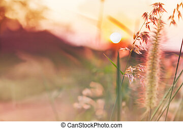 Romantic pink colour tone nature view of grass flower and sunset