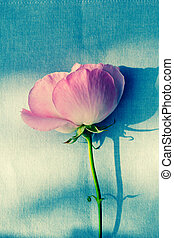 Romantic pink rose on fabric green background