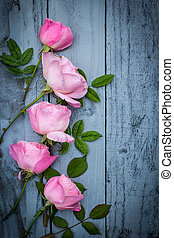 Romantic pink roses on green background