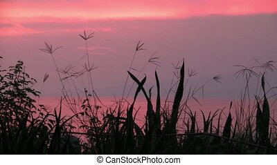 Romantic Pink Sunset with Black Silhouettes of Grass and Vegetation on Lake Albert, Uganda, East Africa