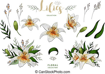 Romantic postcard elements set of lily flowers isolated on white