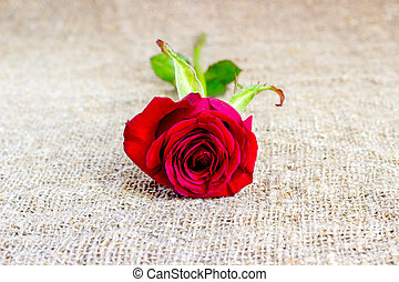 Romantic red rose backgrounds