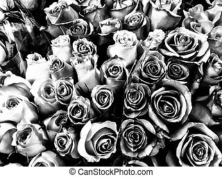 romantic roses in black and white