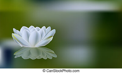 Romantic summer background with white lilies reflected in...