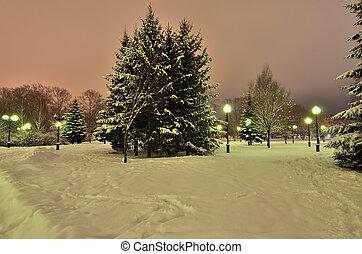 Romantic walk in a winter park at night.