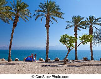 romantische, ontsnapping, bomen, palm, onder, strand