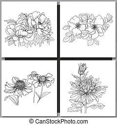 romantische, vector, drie, achtergrond, set, echinaceas.