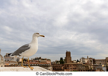 Rome Roofs with Seagull