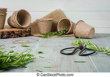 romero, para, plantación, con, herramientas de jardín, en, tabla de madera