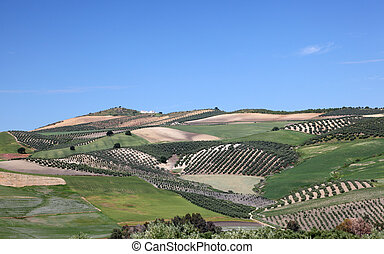 ronda, andalousie, paysage, espagne