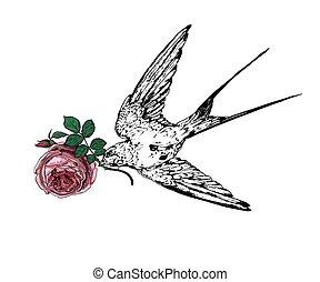 rondine, rosa
