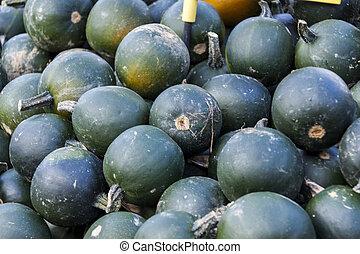 Rondini cucurbita pumpkin pumpkins from autumn harvest on a market