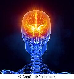 rontgen, hersenen, medische onderzoekende blik, vooraanzicht