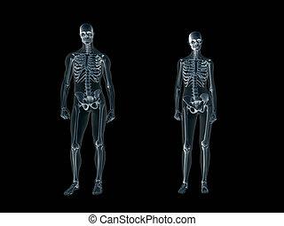 rontgen, lichaam, xray, man, woman., menselijk
