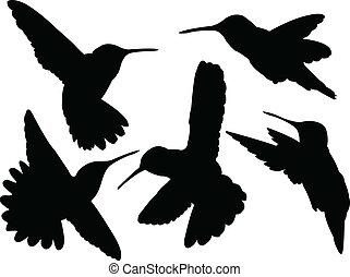 ronzio, uccello, silhouette, collezione