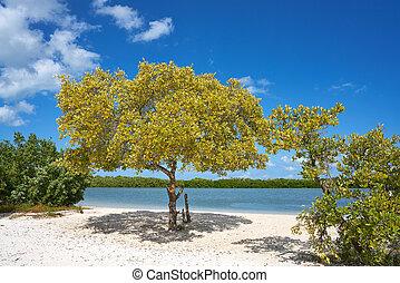 roo, isla,  mangroove,  holbox,  quintana, playa