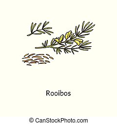Roobos plant drawing with fresh green leaf and steeps twigs...