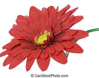 rood, chrysant