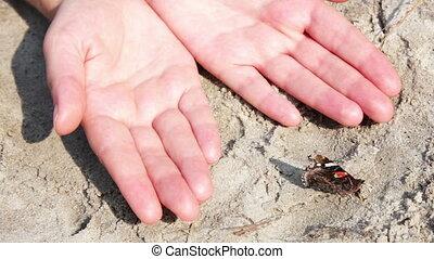 rood, en, black , vlinder, op het zand