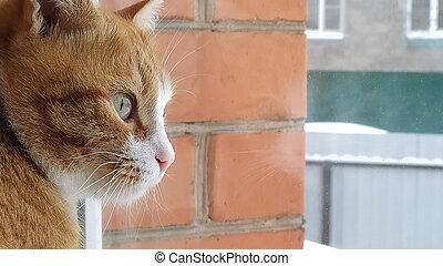 rood, het kijken, blik, door, kat, katje, glas, tabby, venster., nature., zit, sill, straat., venster, weerspiegelde, uit