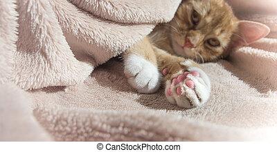 rood, kat, ligt, het rusten, met, een, roze, zachte speelbal