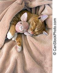 rood, kat, ligt, het rusten, met, een, roze, zachte speelbal, varken
