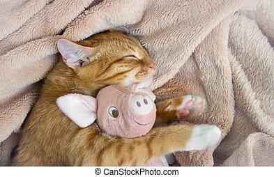 rood, kat, ligt, het rusten, slaap, met, een, roze, zachte speelbal, varken