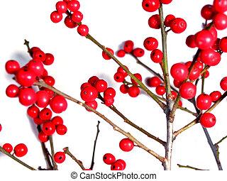 rood, kerstmis, besjes, op wit, 2