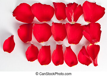rood, kroonblad, roos