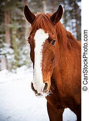 rood paard, op, winter, achtergrond