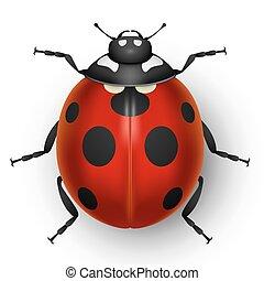rood, schattig, lieveheersbeest, vrijstaand, op wit