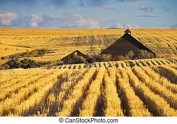 Roof of a farm in wheaten fields of Montana after harvesting