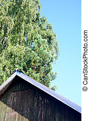 roof of old house