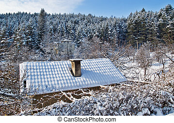 Roof, snow anf forest in winter