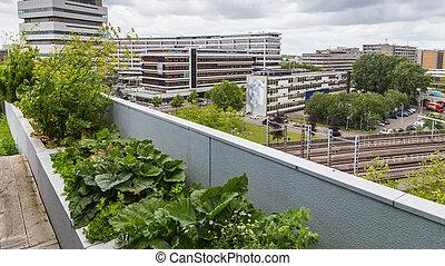 Roofgarden in Rotterdam, Netherlands - Vegetable roofgarden ...