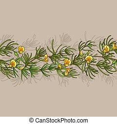 rooibos seamless pattern - rooibos branches seamless pattern...