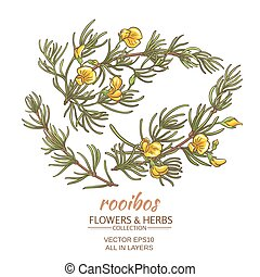 rooibos vector set - branch of rooibos on white background